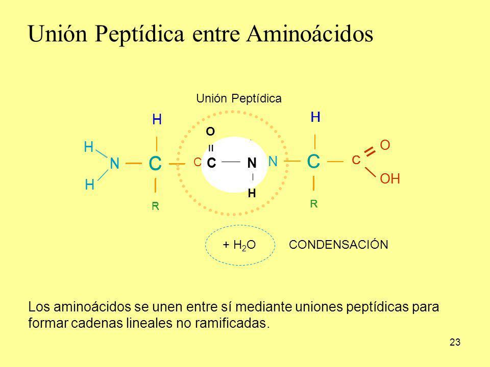 Unión Peptídica entre Aminoácidos