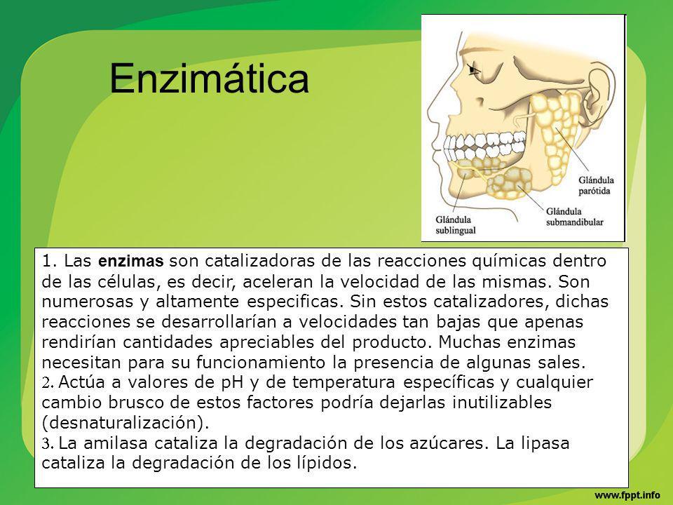 Enzimática