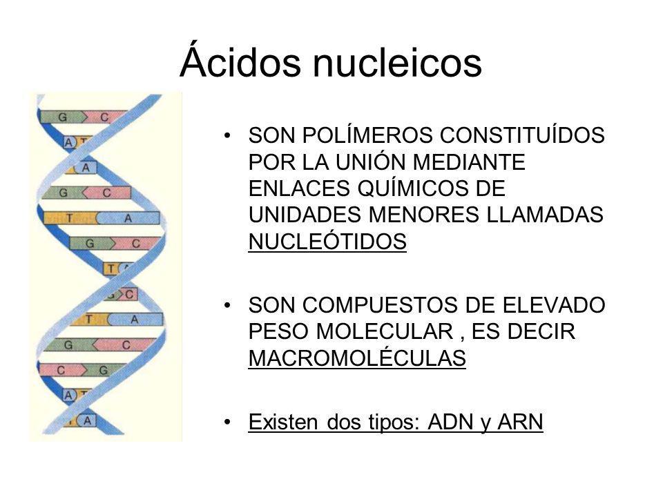 Ácidos nucleicos SON POLÍMEROS CONSTITUÍDOS POR LA UNIÓN MEDIANTE ENLACES QUÍMICOS DE UNIDADES MENORES LLAMADAS NUCLEÓTIDOS.