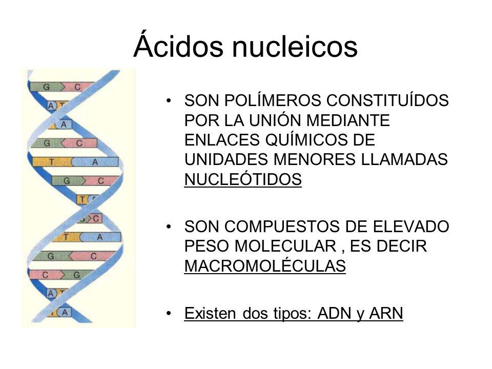 Ácidos nucleicosSON POLÍMEROS CONSTITUÍDOS POR LA UNIÓN MEDIANTE ENLACES QUÍMICOS DE UNIDADES MENORES LLAMADAS NUCLEÓTIDOS.
