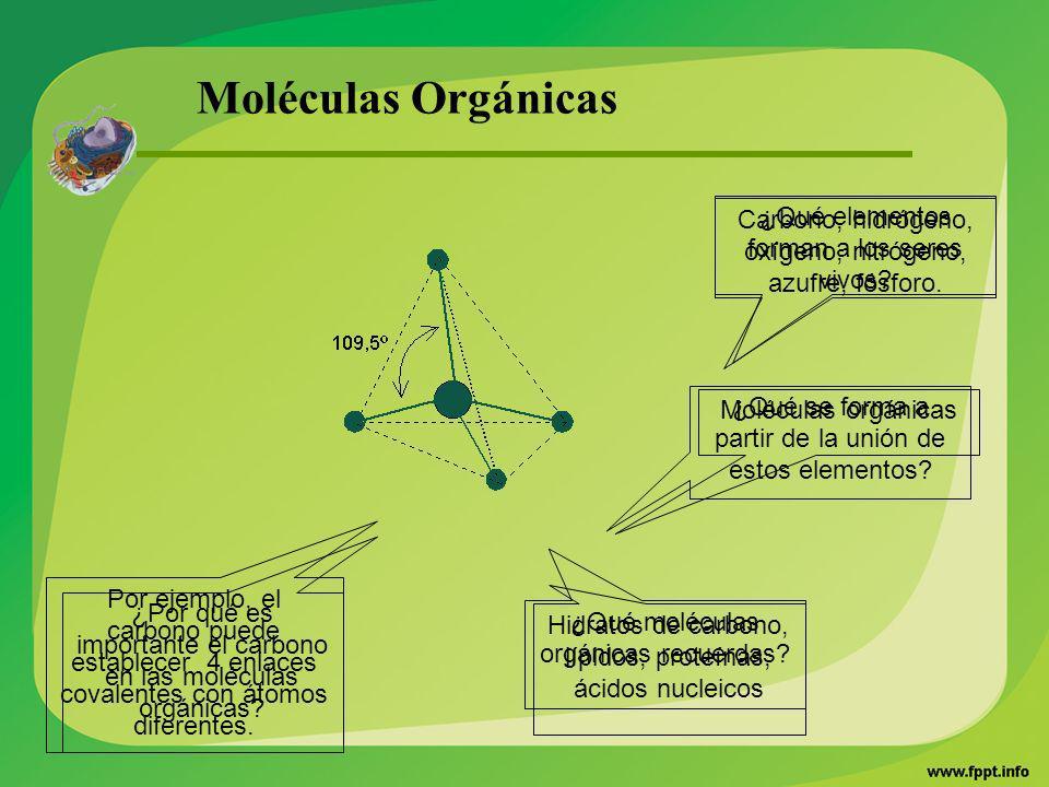 Moléculas Orgánicas Carbono, hidrógeno, oxígeno, nitrógeno, azufre, fósforo. ¿Qué elementos forman a los seres vivos