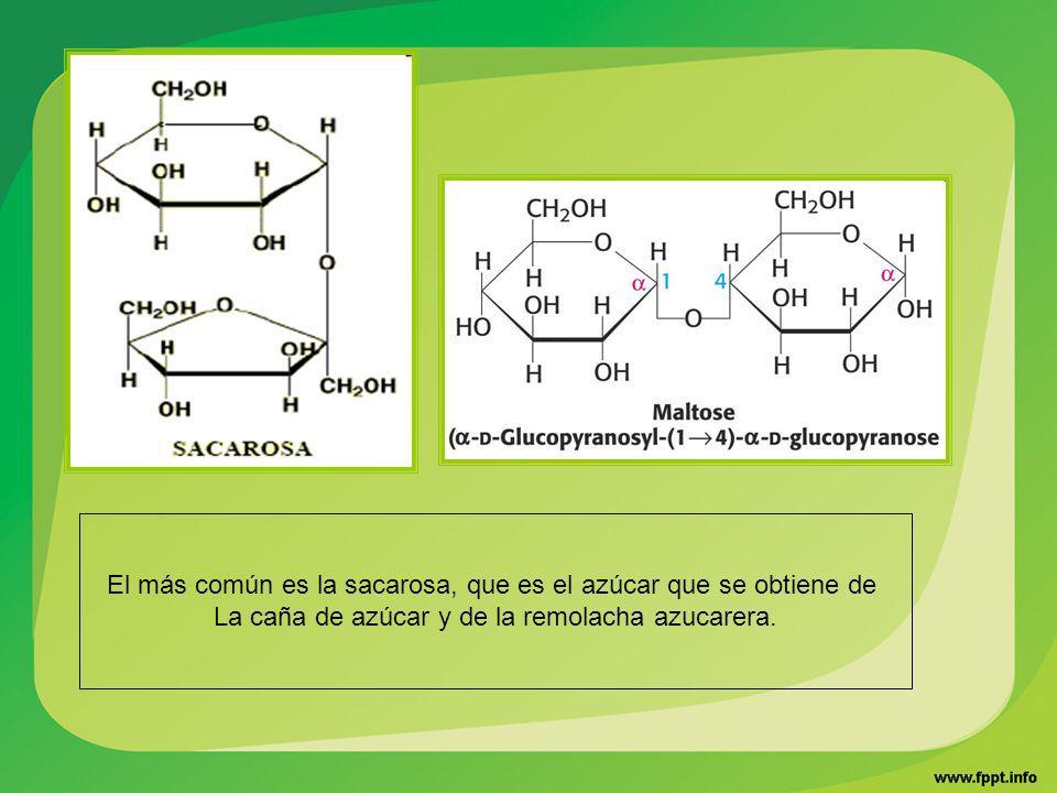 El más común es la sacarosa, que es el azúcar que se obtiene de