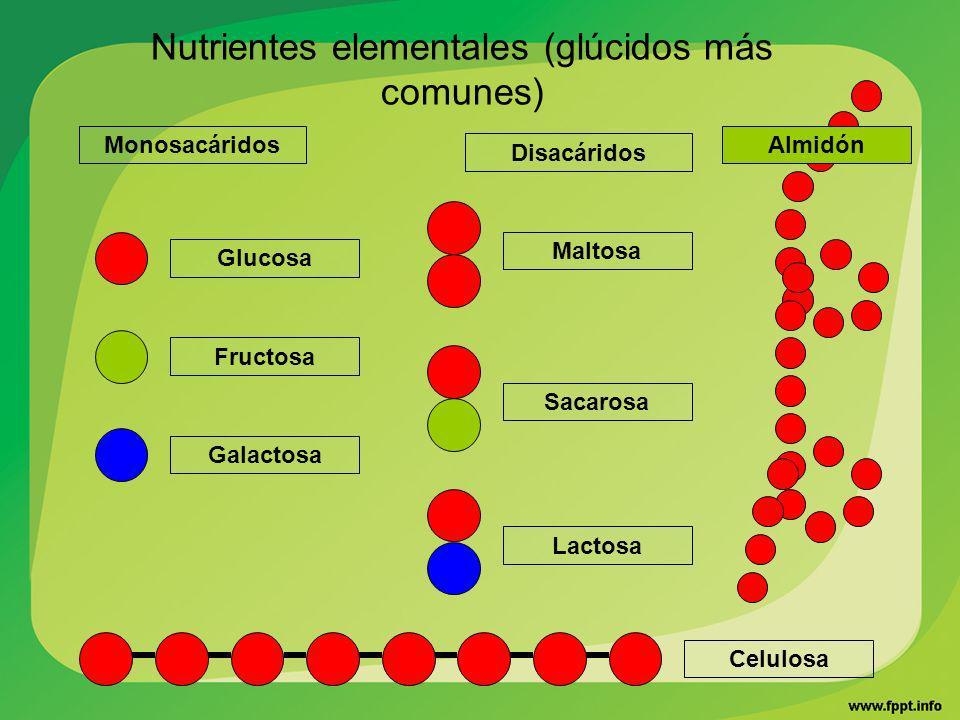 Nutrientes elementales (glúcidos más comunes)