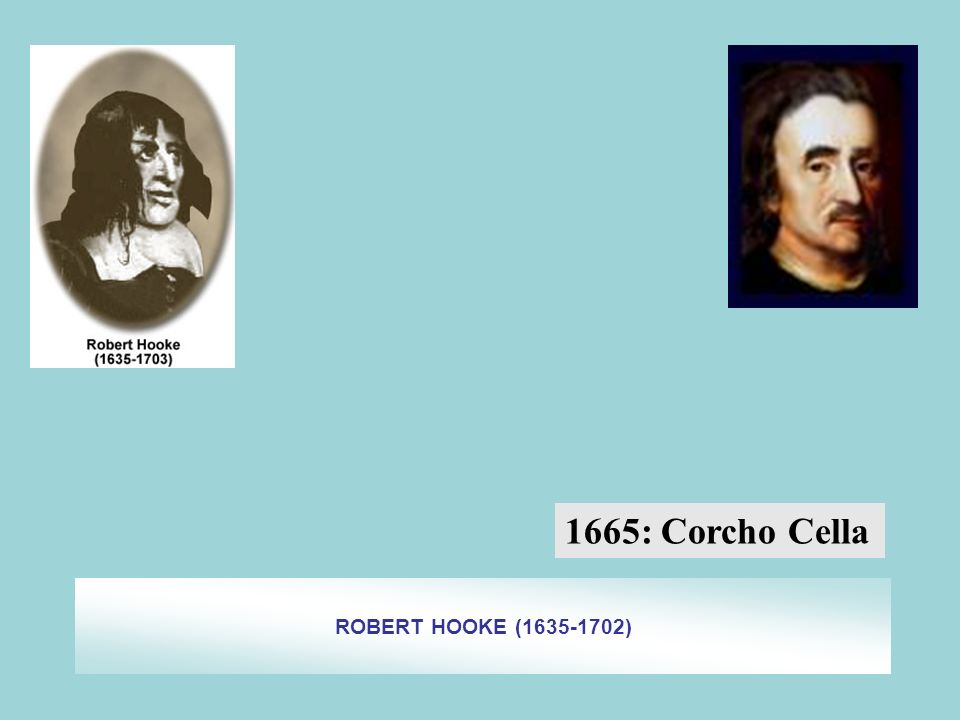 1665: Corcho Cella ROBERT HOOKE (1635-1702)