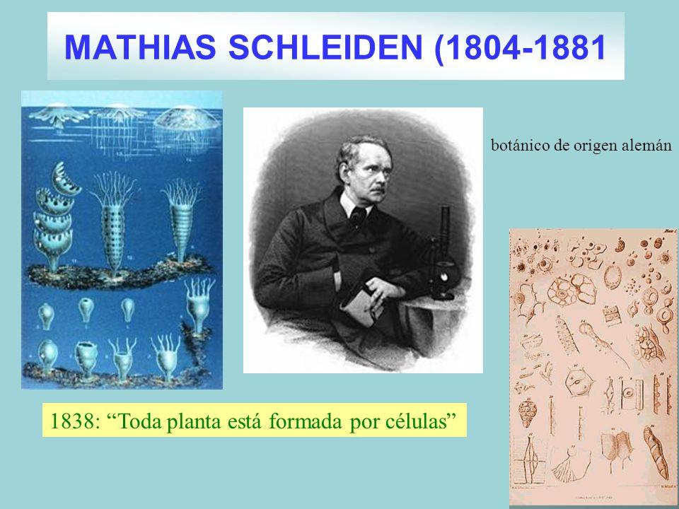MATHIAS SCHLEIDEN (1804-1881 botánico de origen alemán 1838: Toda planta está formada por células