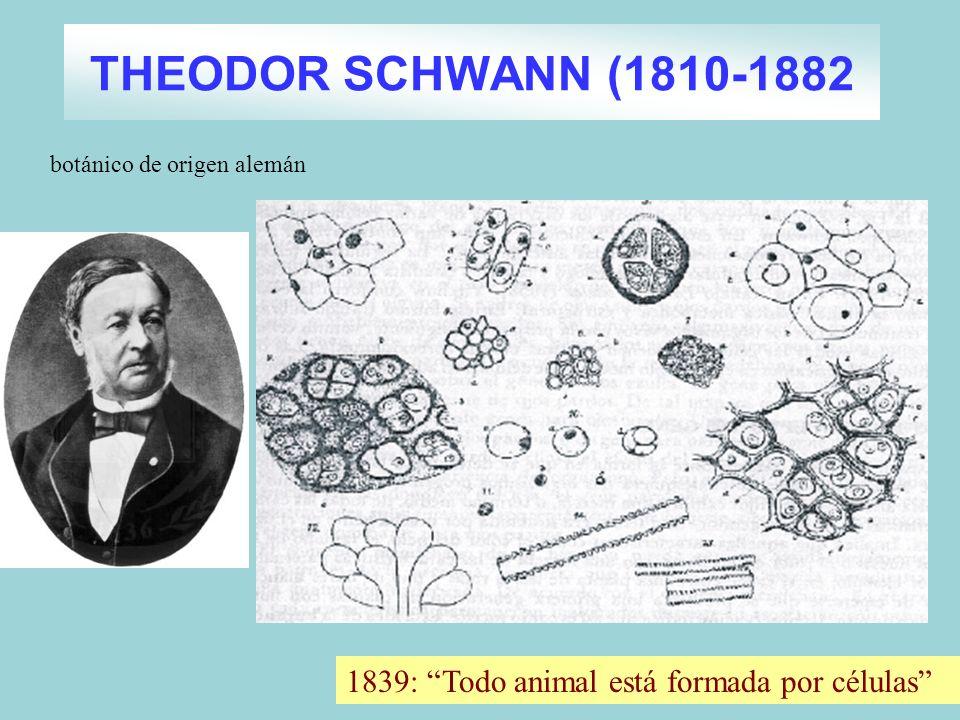 THEODOR SCHWANN (1810-1882 botánico de origen alemán 1839: Todo animal está formada por células