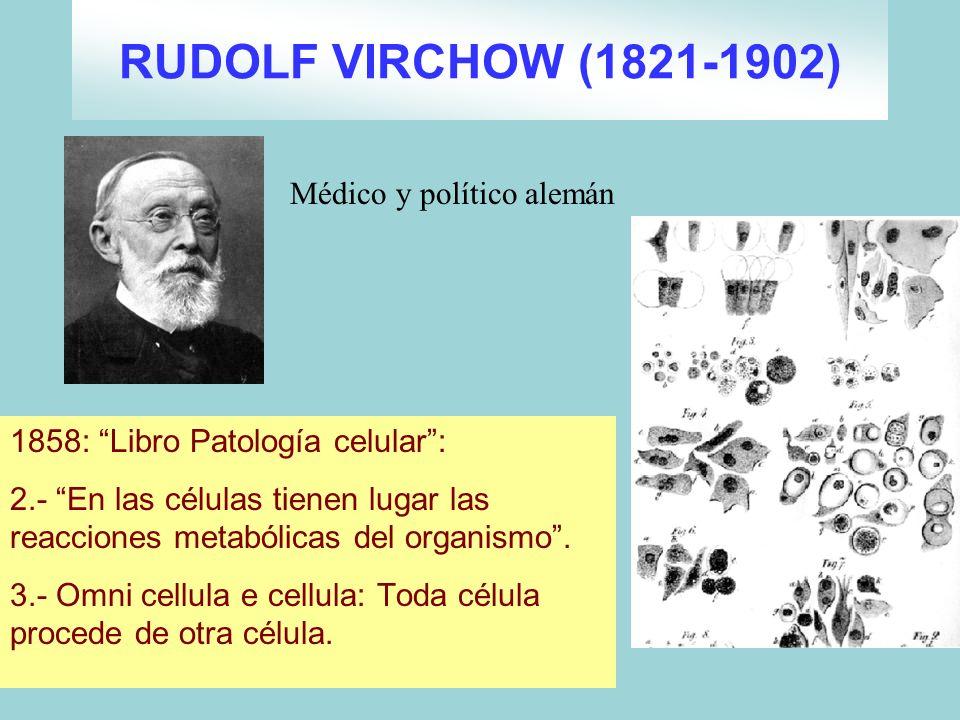 RUDOLF VIRCHOW (1821-1902) Médico y político alemán
