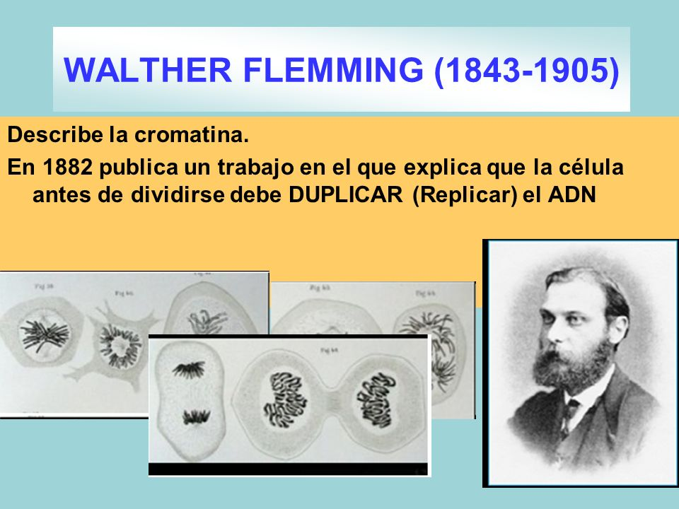 WALTHER FLEMMING (1843-1905)