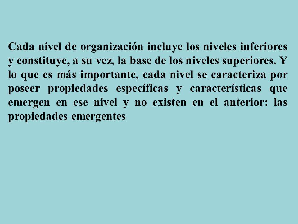 Cada nivel de organización incluye los niveles inferiores y constituye, a su vez, la base de los niveles superiores.