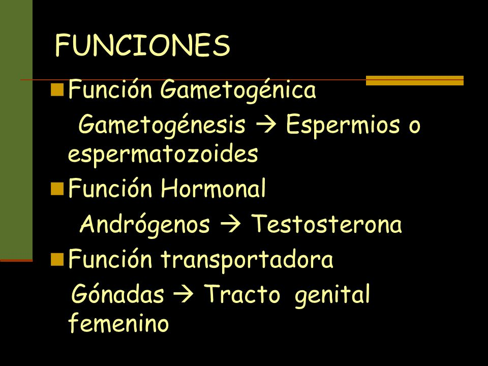 FUNCIONES Función Gametogénica