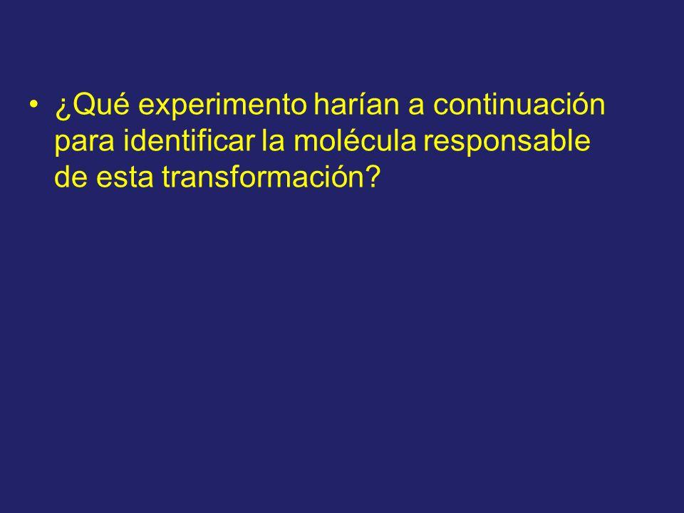 ¿Qué experimento harían a continuación para identificar la molécula responsable de esta transformación