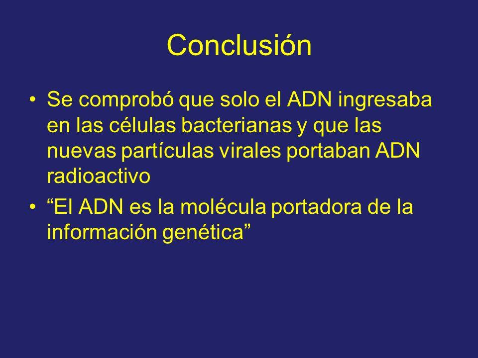 Conclusión Se comprobó que solo el ADN ingresaba en las células bacterianas y que las nuevas partículas virales portaban ADN radioactivo.