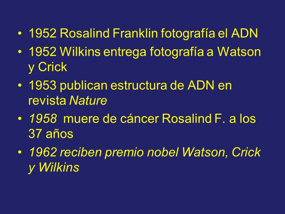 1952 Rosalind Franklin fotografía el ADN