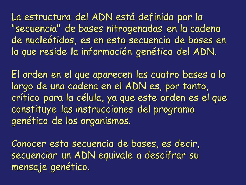 La estructura del ADN está definida por la secuencia de bases nitrogenadas en la cadena de nucleótidos, es en esta secuencia de bases en la que reside la información genética del ADN.