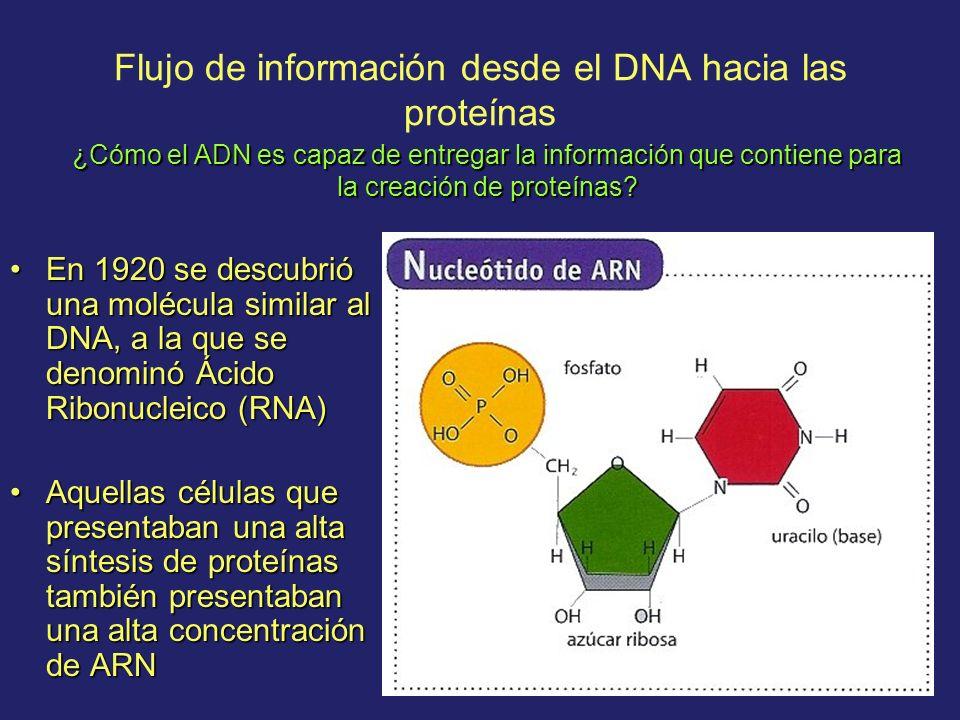 Flujo de información desde el DNA hacia las proteínas