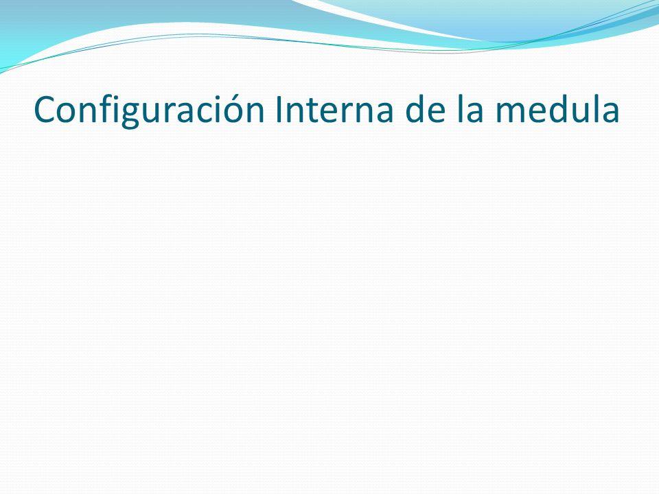Configuración Interna de la medula