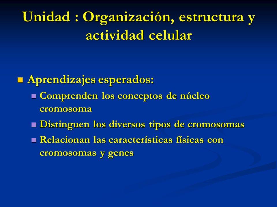 Unidad : Organización, estructura y actividad celular
