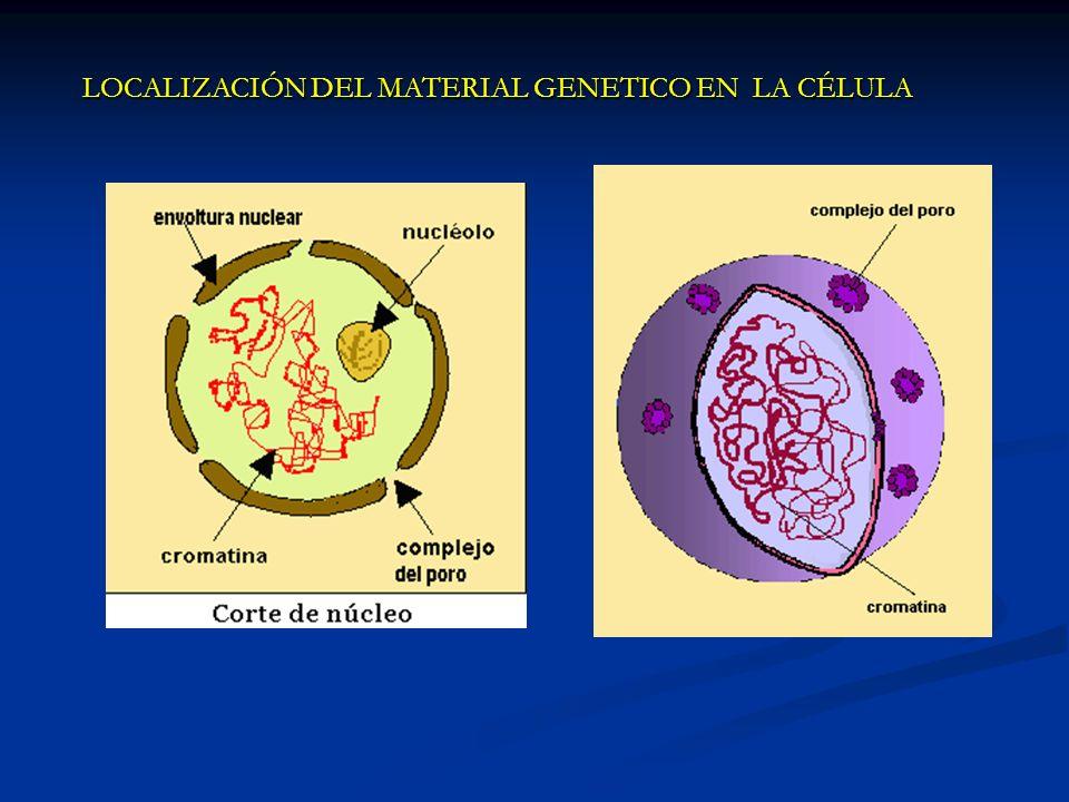 LOCALIZACIÓN DEL MATERIAL GENETICO EN LA CÉLULA