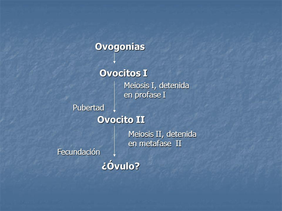 Ovogonias Ovocitos I Ovocito II ¿Óvulo