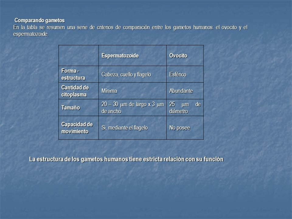 Comparando gametosEn la tabla se resumen una serie de criterios de comparación entre los gametos humanos: el ovocito y el espermatozoide.