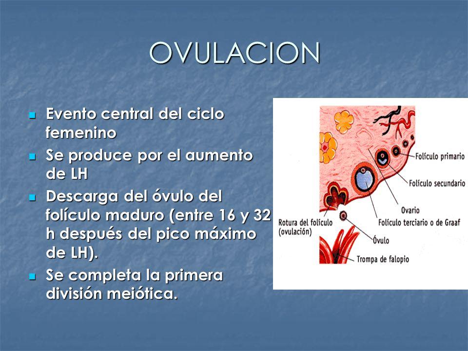 OVULACION Evento central del ciclo femenino