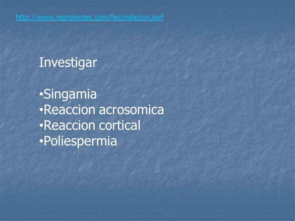 Investigar Singamia Reaccion acrosomica Reaccion cortical Poliespermia