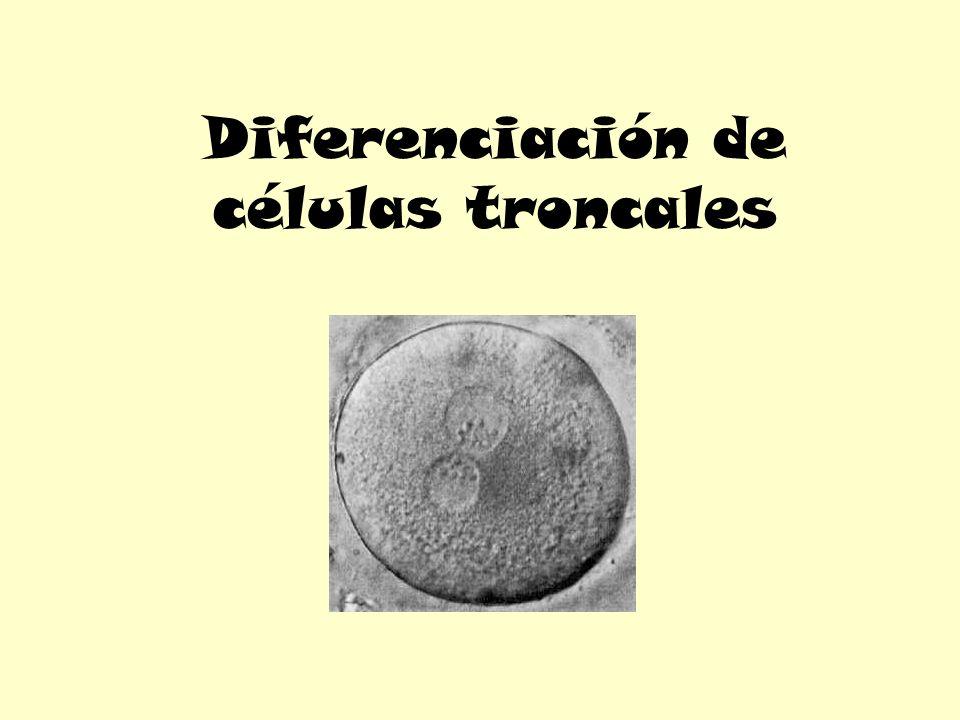 Diferenciación de células troncales