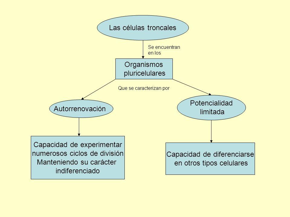 Capacidad de experimentar numerosos ciclos de división
