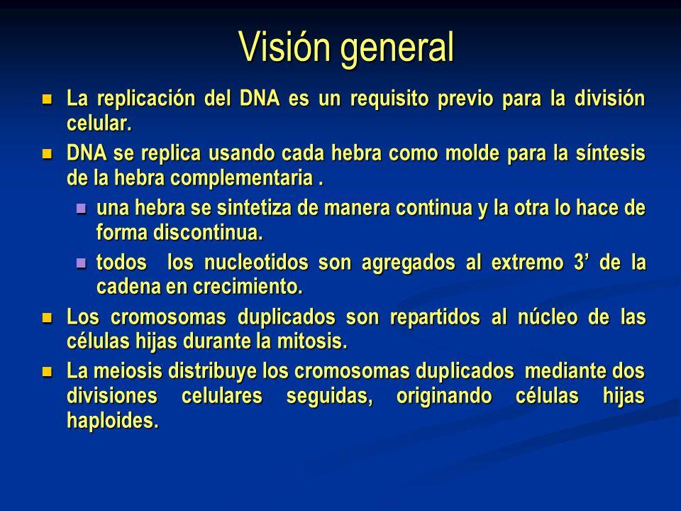 Visión general La replicación del DNA es un requisito previo para la división celular.