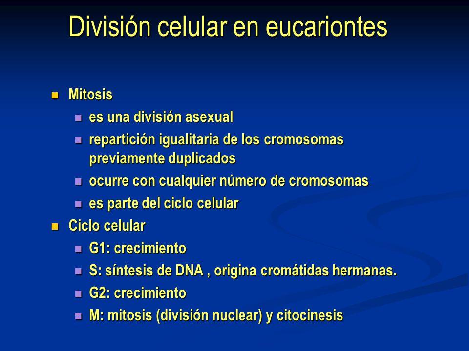 División celular en eucariontes