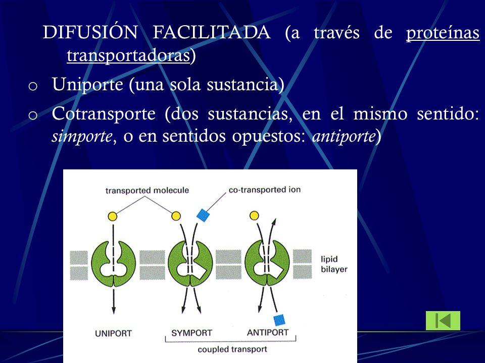 DIFUSIÓN FACILITADA (a través de proteínas transportadoras)
