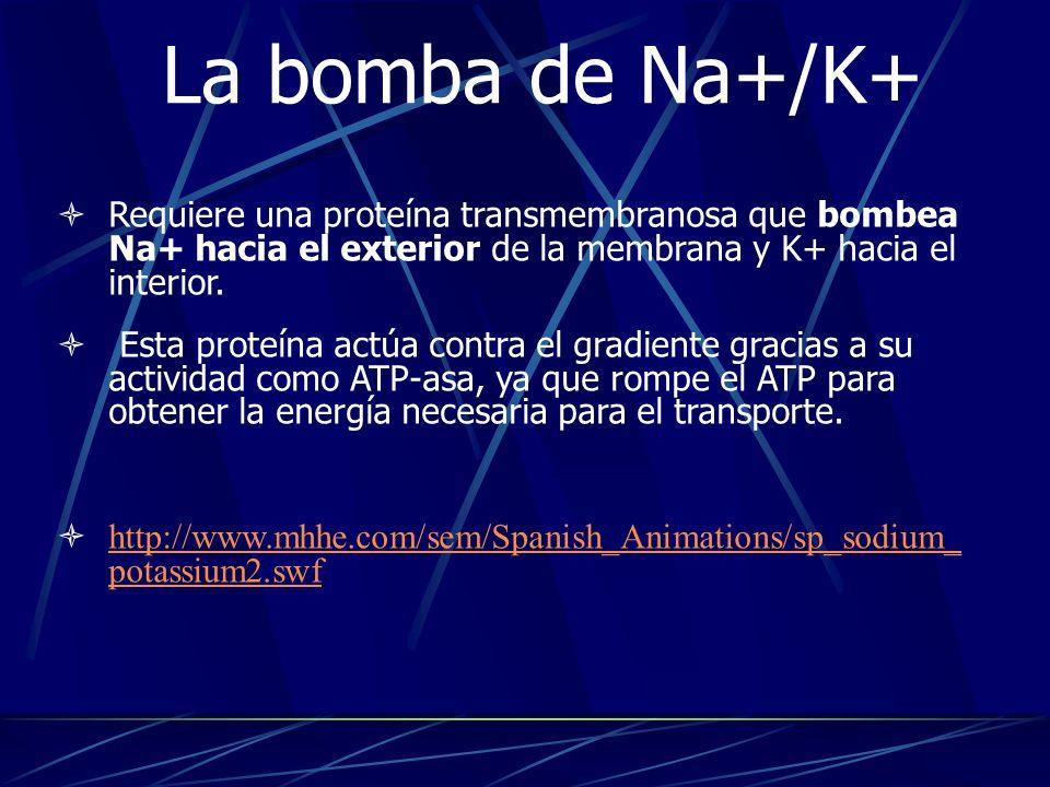 14/01/10 La bomba de Na+/K+ Requiere una proteína transmembranosa que bombea Na+ hacia el exterior de la membrana y K+ hacia el interior.