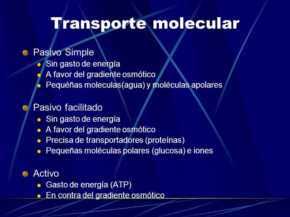 Transporte molecular Pasivo Simple Pasivo facilitado Activo