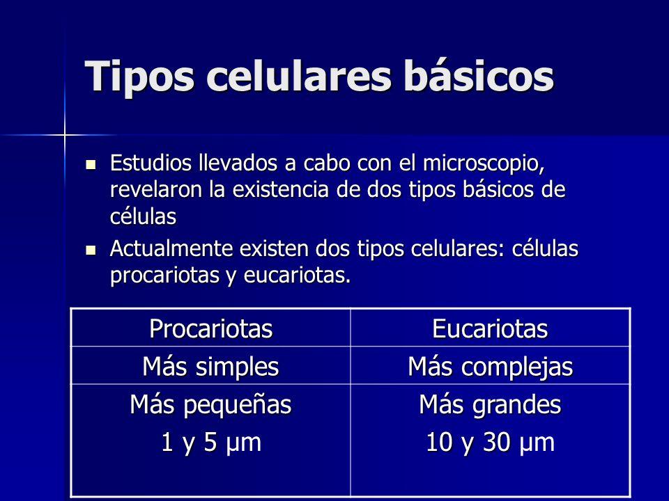 Tipos celulares básicos