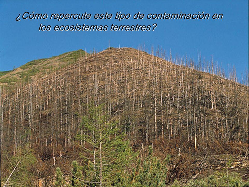 ¿Cómo repercute este tipo de contaminación en los ecosistemas terrestres