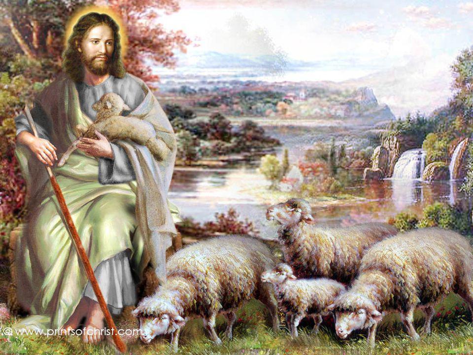 + Las ovejas deben escuchar la voz del Pastor y seguirlo…