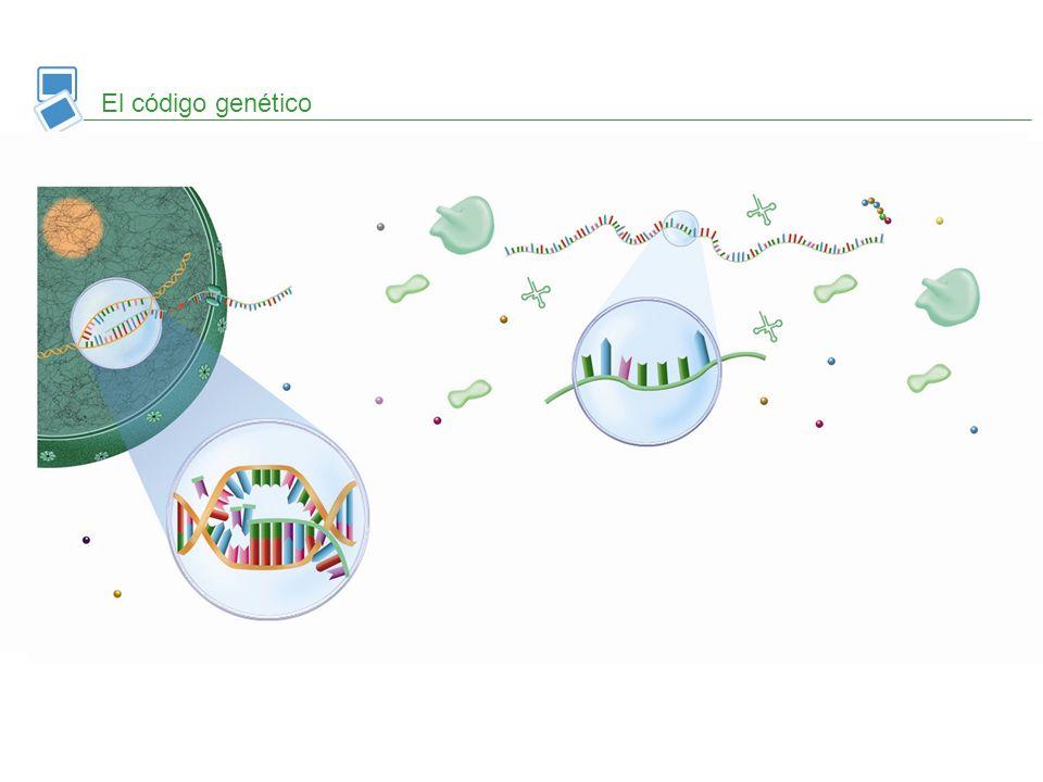El código genético aminoácido. ARNt.
