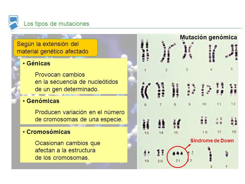 Los tipos de mutaciones