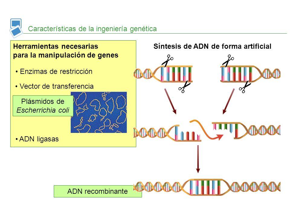 Plásmidos de Escherrichia coli