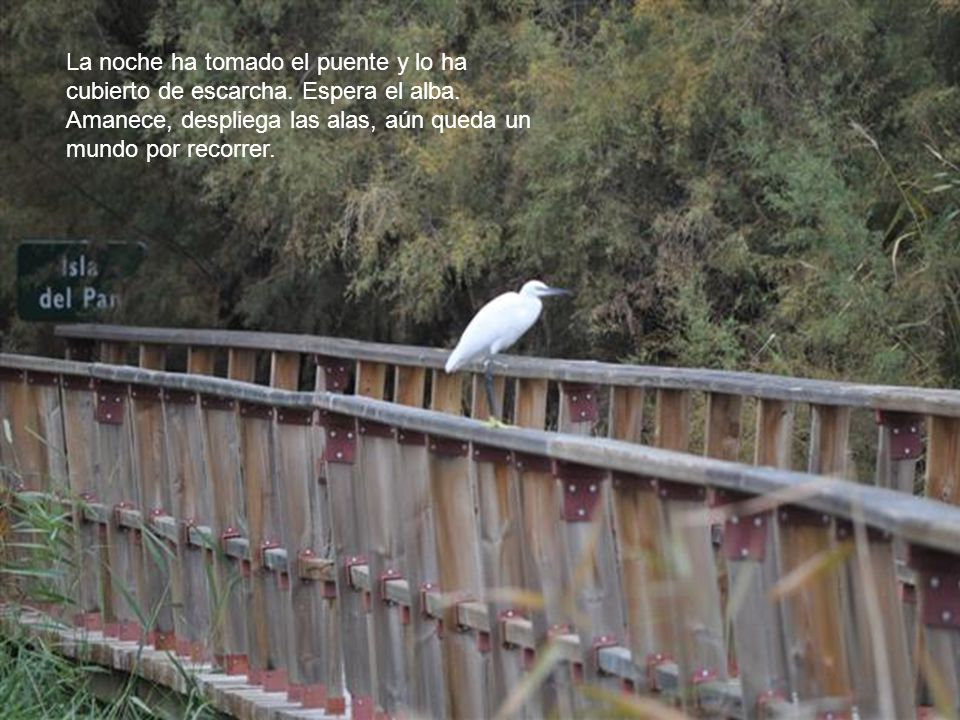La noche ha tomado el puente y lo ha cubierto de escarcha