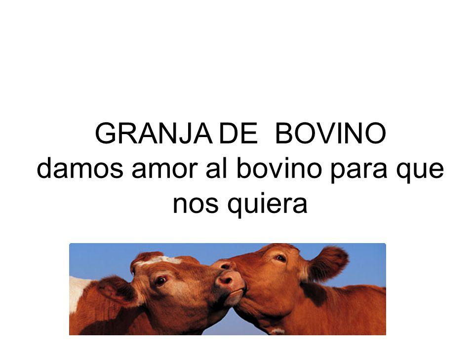 GRANJA DE BOVINO damos amor al bovino para que nos quiera