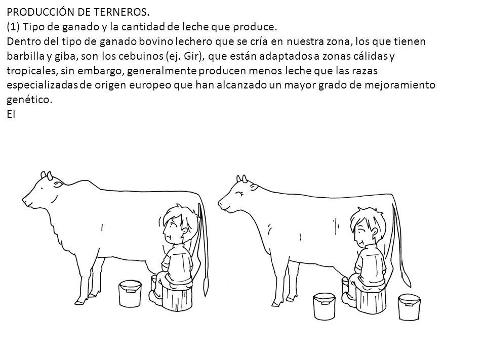 PRODUCCIÓN DE TERNEROS.