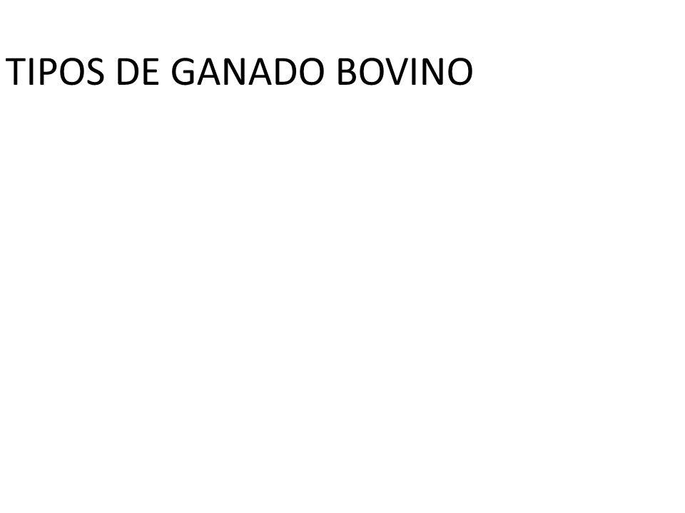 TIPOS DE GANADO BOVINO