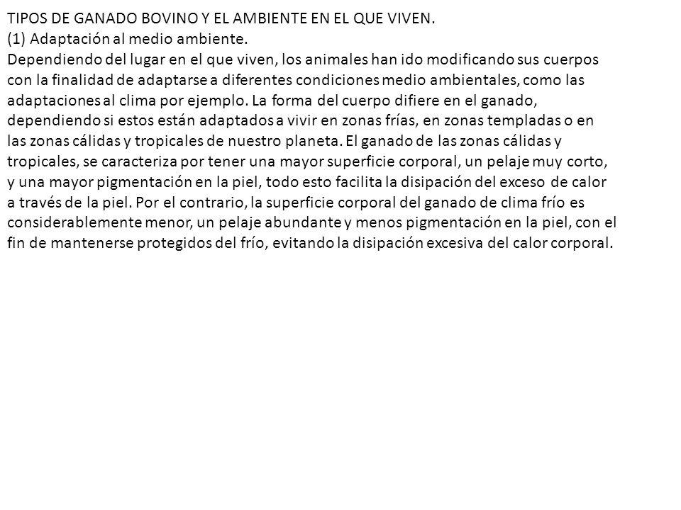 TIPOS DE GANADO BOVINO Y EL AMBIENTE EN EL QUE VIVEN.