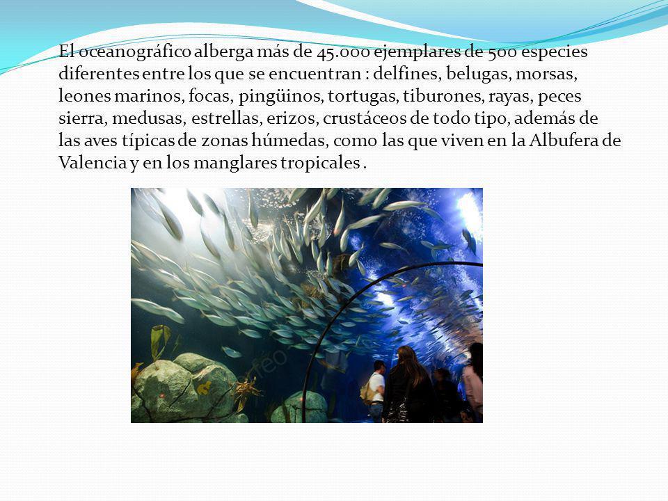 El oceanográfico alberga más de 45