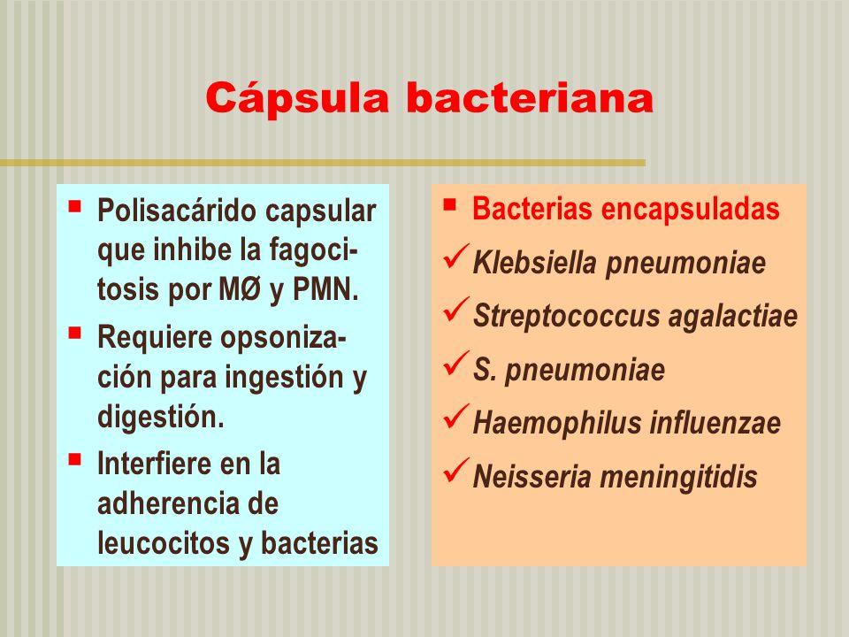 Cápsula bacteriana Polisacárido capsular que inhibe la fagoci-tosis por MØ y PMN. Requiere opsoniza-ción para ingestión y digestión.