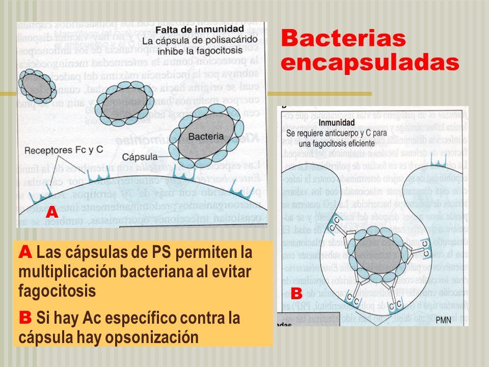 Bacterias encapsuladas