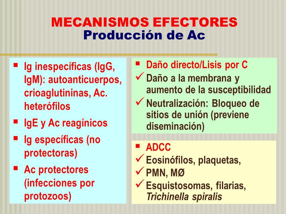 MECANISMOS EFECTORES Producción de Ac