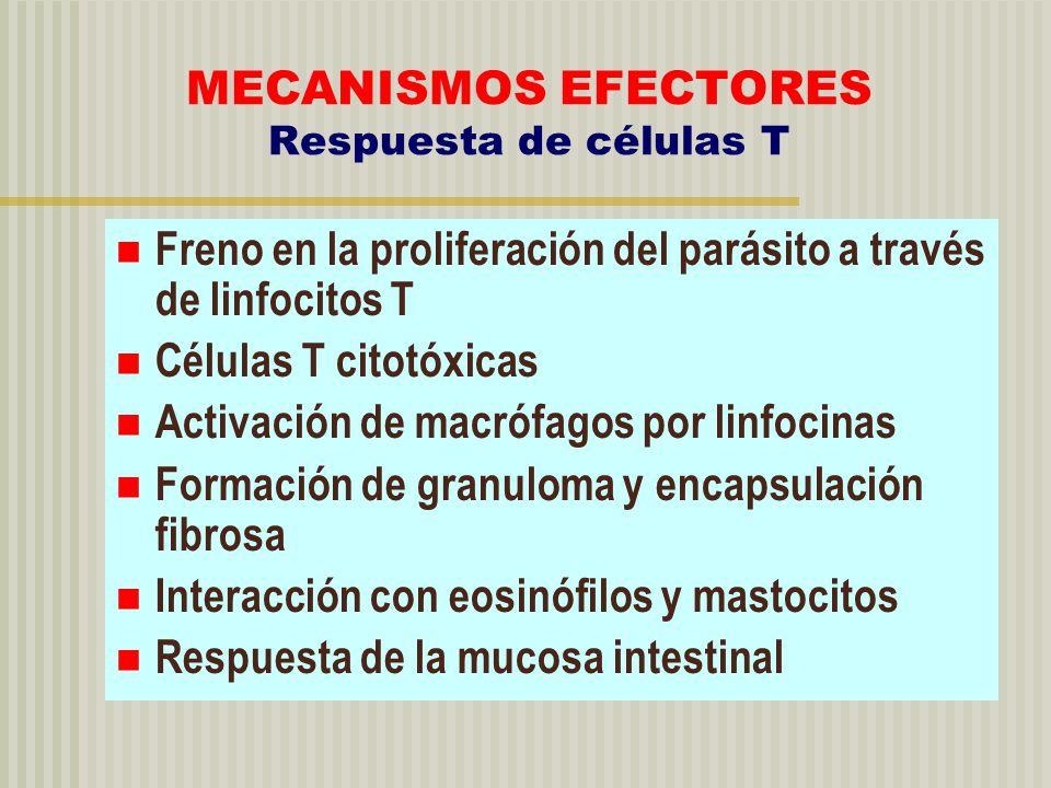 MECANISMOS EFECTORES Respuesta de células T