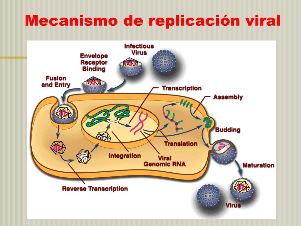 Mecanismo de replicación viral